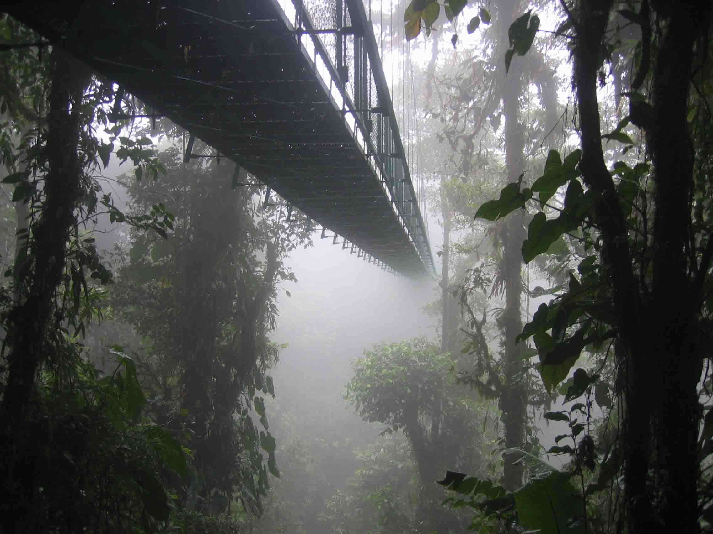 Costa Rica - santa elena skywalk